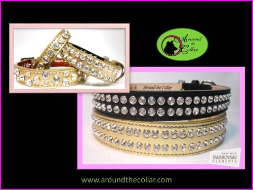 Fashionable Pet Collars