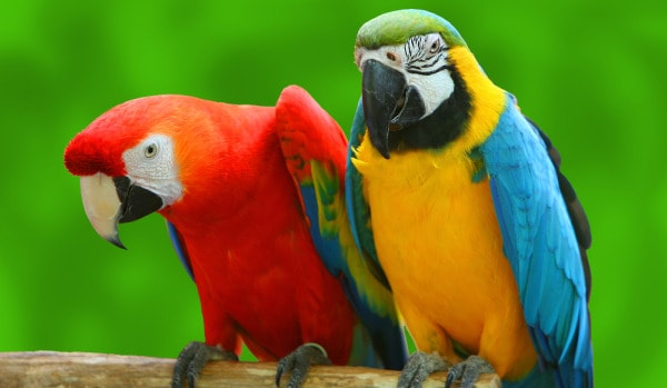 SoCal Parrot Charity