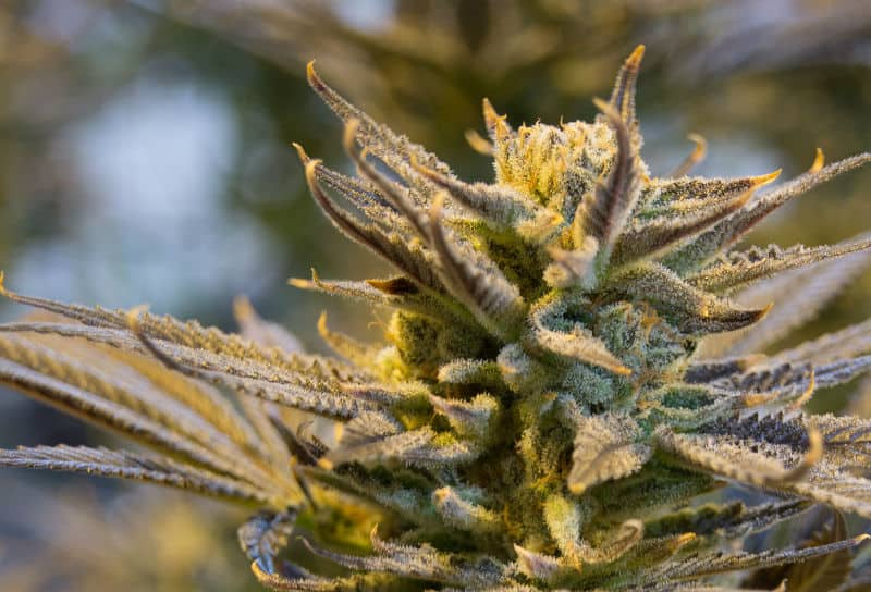 The Pros and Cons of #Marijuana Legalization