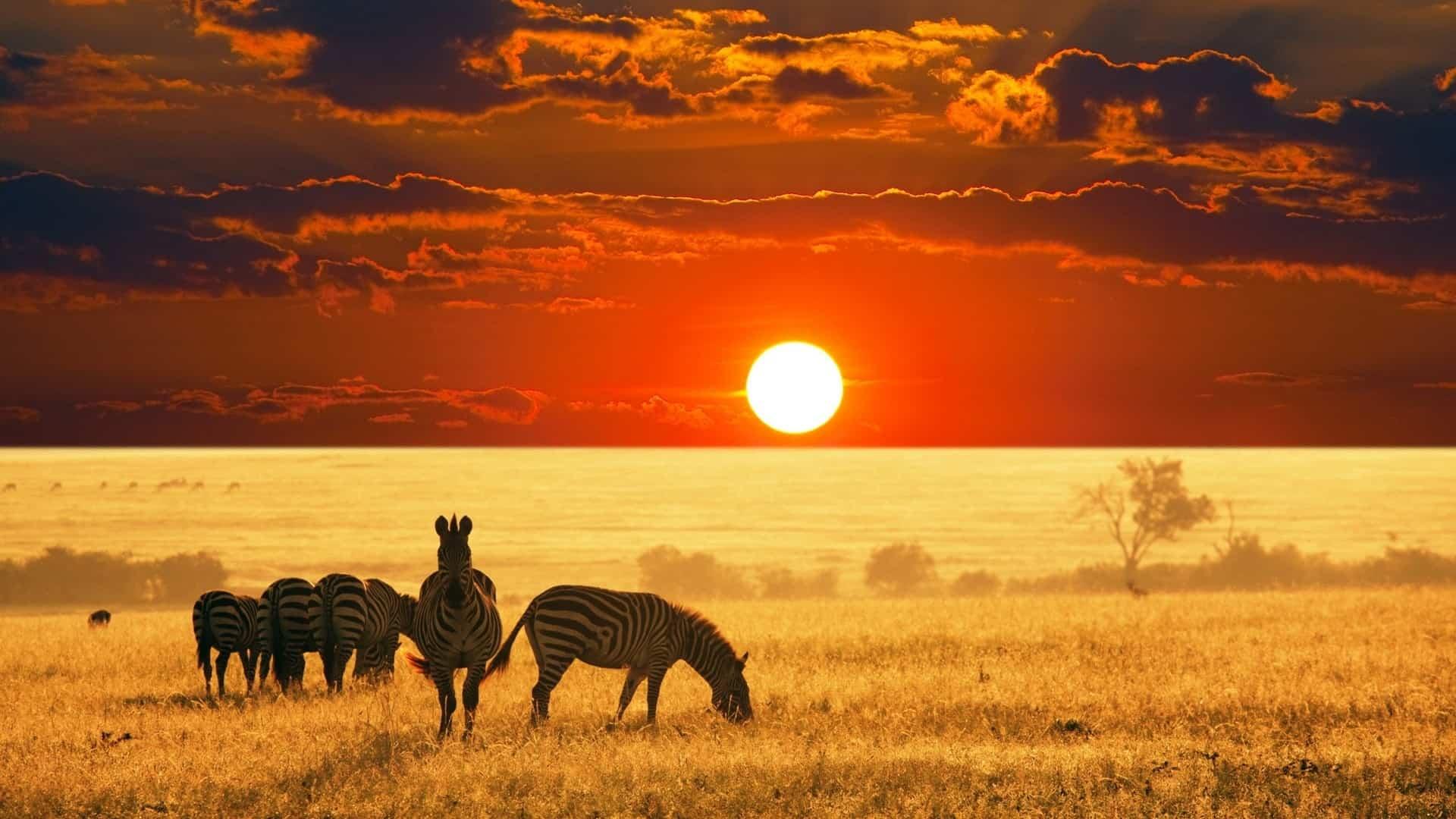 Resultado de imagem para africa safari