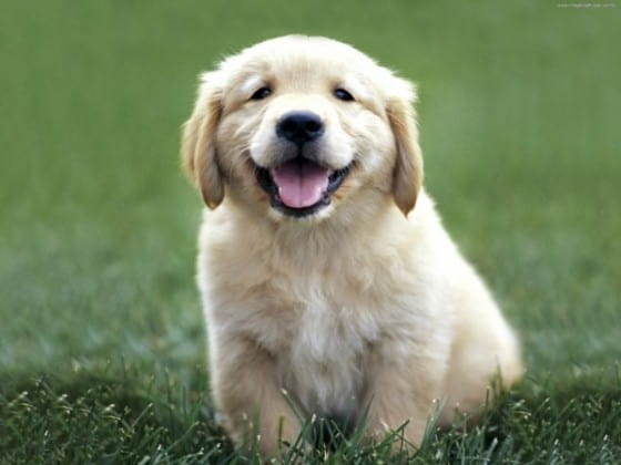 Happy and Healthy Pets