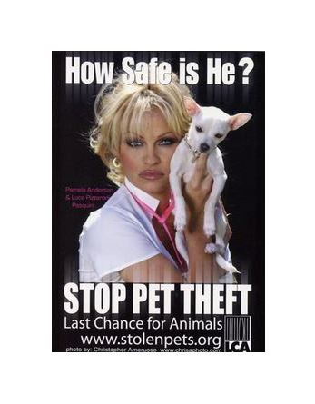 Last Chance for Animals Charity